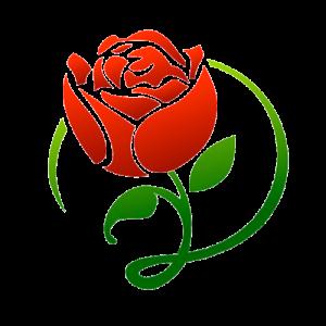 La pocita de la rosa